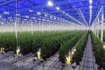 Строительство тепличного комплекса липецкой компании «Овощи Черноземья» за 6 млрд рублей завершается