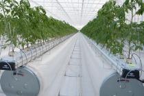 «ЛипецкАгро» планирует построить еще один тепличный комплекс пятого поколения
