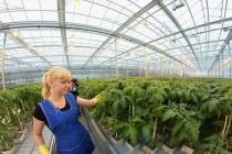 «Овощи Черноземья» собираются поменять «прописку» инвестпроекта за 12 млрд рублей в Липецкой области