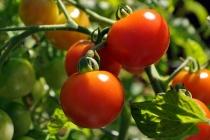 Компания «Долина овощей» вложит в расширение теплиц в Липецкой области 9 млрд рублей
