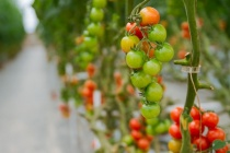 Порча сельскохозяйственных земель обошлась тепличному комбинату «ЛипецкАгро» в 2,2 млн рублей