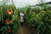 Компания «Овощи Черноземья» построит в Липецкой области тепличный комплекс за 24 млрд рублей в 2019 году