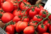 Компания «Овощи Черноземья» запустит вторую очередь тепличного комплекса за 8 млрд рублей