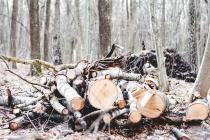 Ельчанам удалось остановить вырубку деревьев в парке 40-летия Октября
