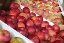 Федералы подкинут липецкому производителю соков 45 млн рублей на фруктохранилище