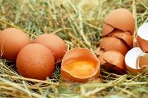 Липецкий производитель яиц попал под административку за 80 нарушений природоохранного законодательства
