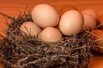 «Липецкптица» благодаря модернизации увеличила производство куриных яиц на 300 тыс. штук в сутки