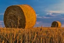 Производители сахара стали крупнейшими собственниками земли в Черноземье