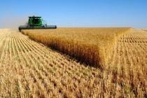 Одна из крупнейших аграрных компаний заинтересовалась покупками земель липецкого «Автолидера»