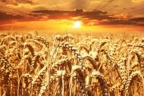 Минсельхоз лишит черноземные регионы субсидирования железнодорожных перевозок зерна
