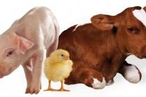 В Липецкой области отмечается сокращение поголовья всех сельскохозяйственных животных
