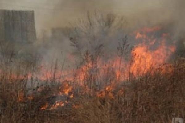 Вместе с мусором сожгли два гектара травы