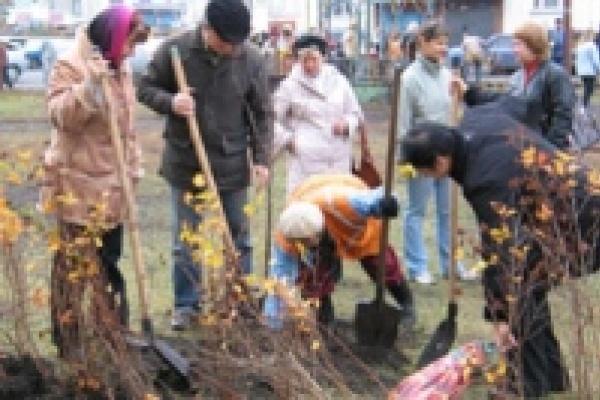 Чиновники посадили деревья