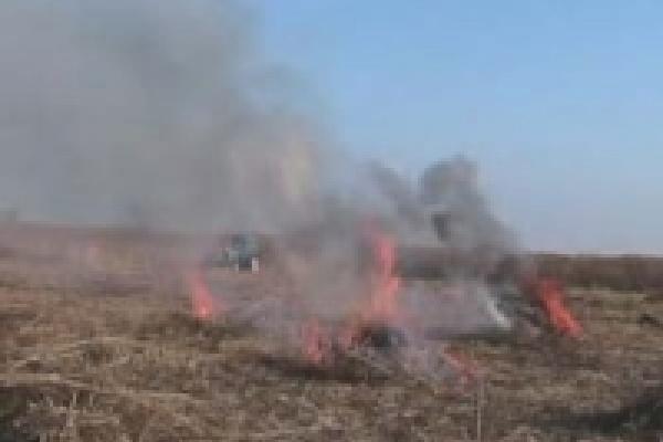 Коноплю уничтожили на пяти гектарах