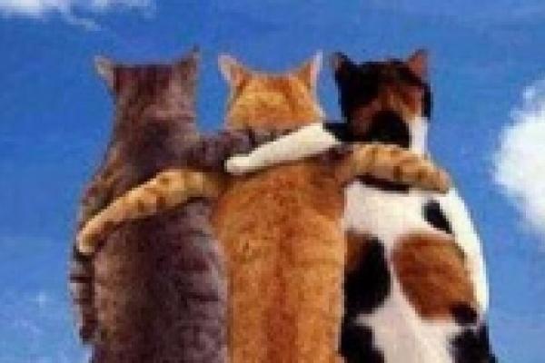 Малыши и воспитанники детдомов посмотрят на кошек бесплатно