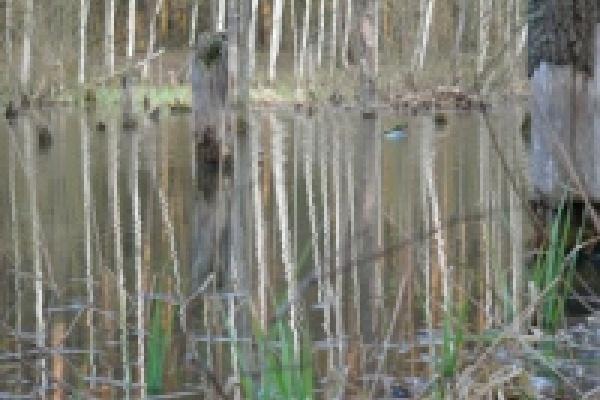 Безработный утонул в болоте