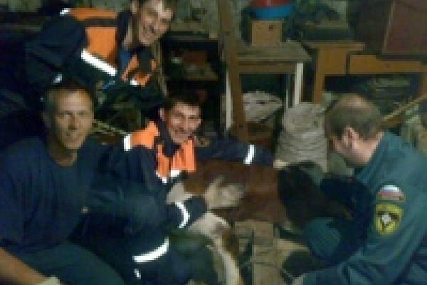 В Липецке спасатели боролись за жизнь... быка