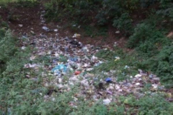 Экологи взялись за Быханов сад