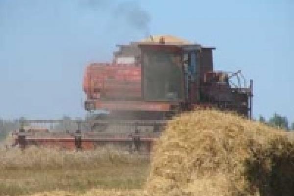 Давно невиданная жара губит урожай