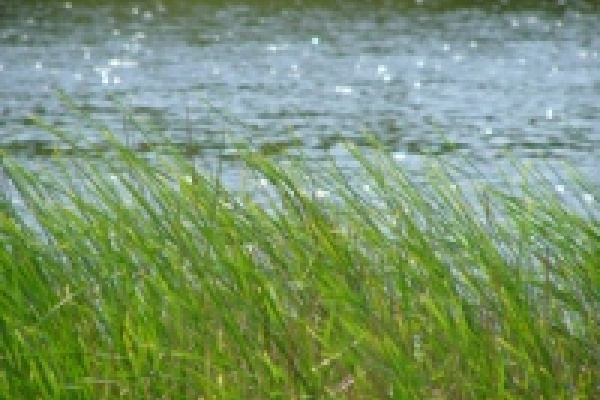 В Быстрой Сосне запрещено купаться