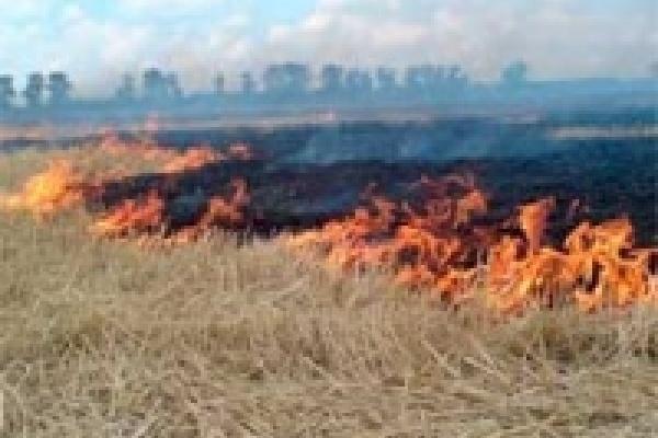 В Липецкой области штрафут за сжигание стерни