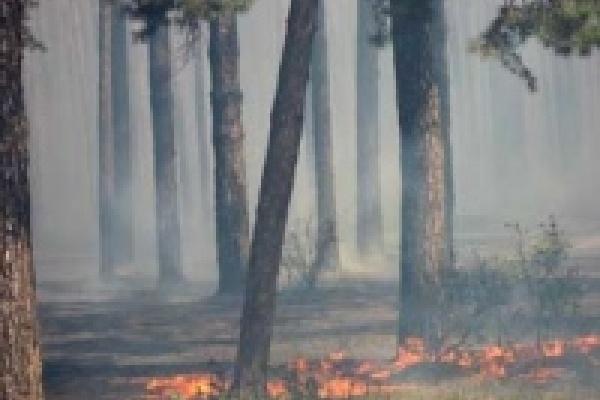 Сейчас лес горит в пяти местах Липецкой бласти