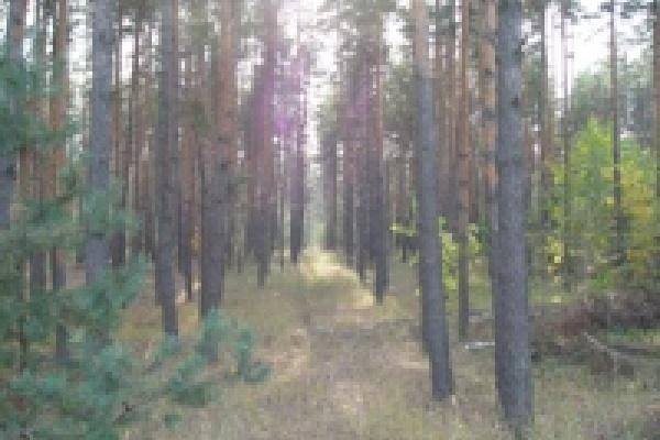 В Липецкой области на смену хвойным лесам придут разнопородные
