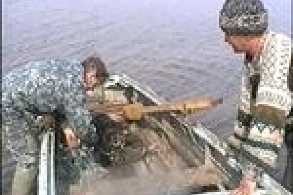 На Матырском водохранилище бесчинствуют браконьеры