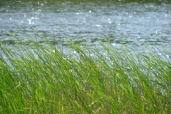В реке Быстрая сосна купаться нельзя