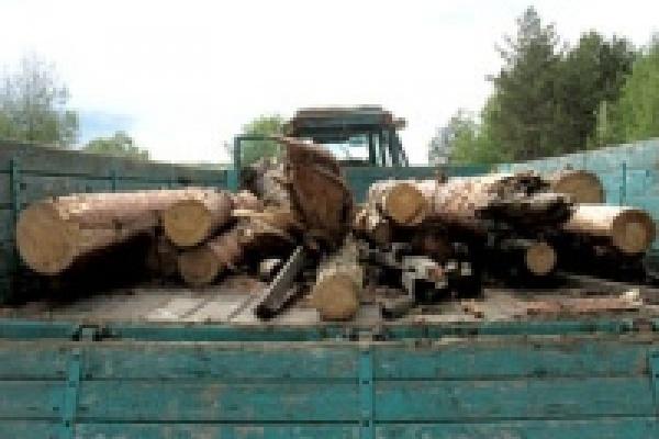 За срубленные в заповеднике деревья отправили на год в колонию