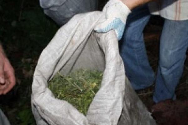 В Липецке выявили еще 124 наркомана