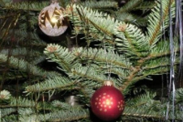 В декабре липчане купили елок меньше, чем годом ранее