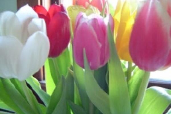 30 тысяч тюльпанов от «Зеленхоза» липчане раскупили мгновенно