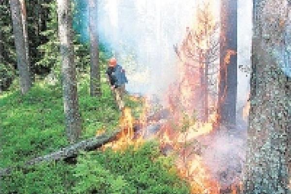 В Липецкой области горят сухая трава и лесная подстилка