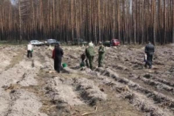 В Липецкой области появится «Милицейский лес»