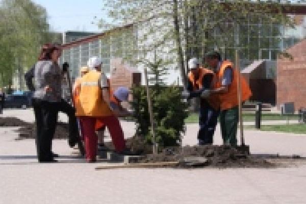 В Липецке начали украшать цветами площадь Героев