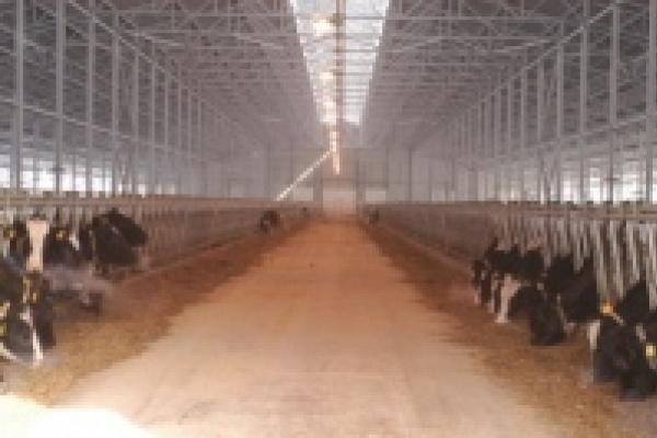 В восстановление молочного  комплекса в Каликино вложат 200 млн. рублей