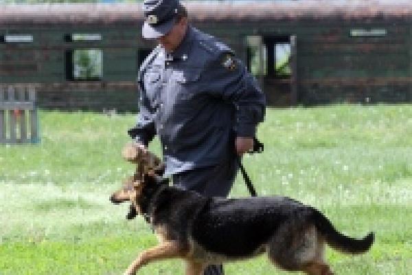В Липецке соревнуются полицейские кинологи