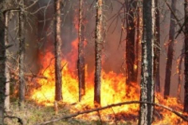 В администрации Липецка обсудили меры по предупреждению пожаров