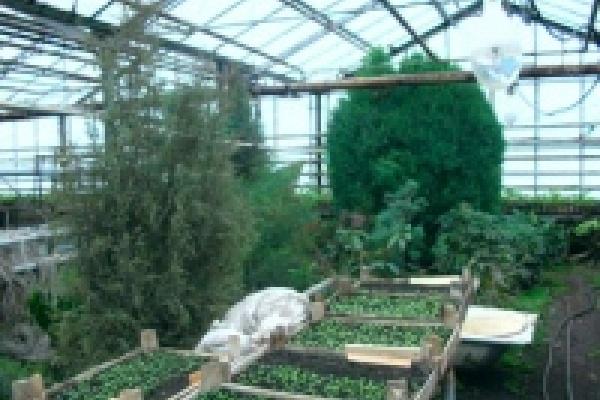 К 8 марта «Зеленхоз» вырастит 25 тысяч тюльпанов