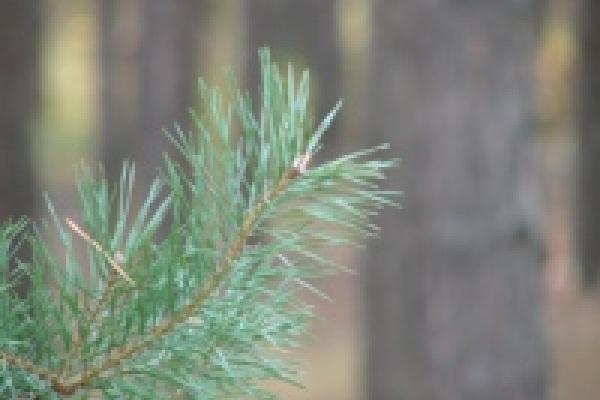 Сгоревший лес восстановят до 2014 года