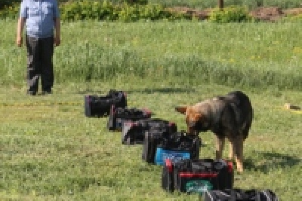 В Липецке выбирают лучшего полицейского-кинолога