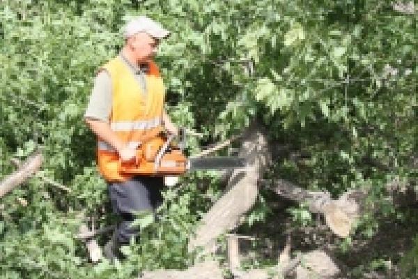 В Липецке продолжаются работы по уборке города после урагана