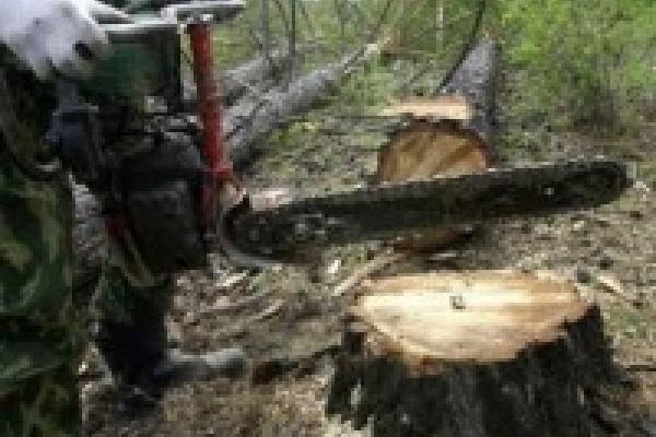 Энергетиков накажут за вырубку леса