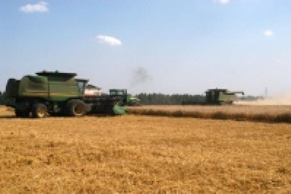 В Липецкой области собрали уже миллион тонн зерна
