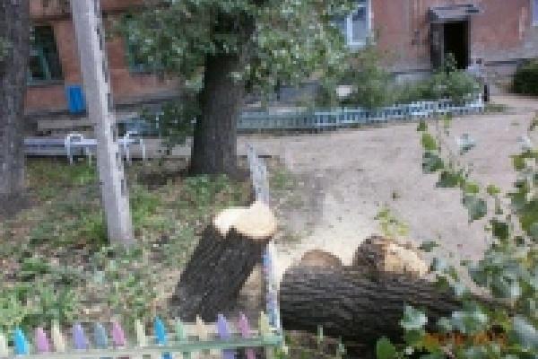 Управление экологии пресекает факты незаконного сноса деревьев