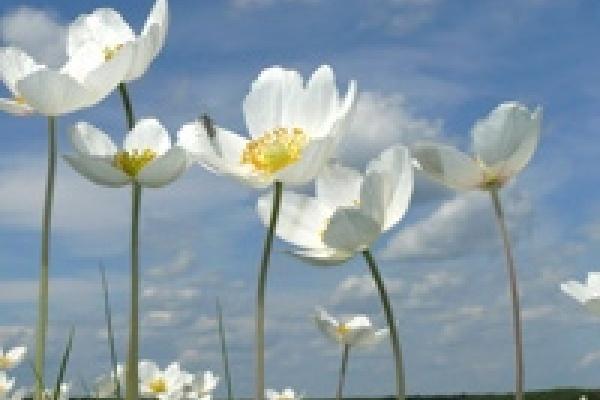 В Липецкой области более насчитывается 50 видов редких растений