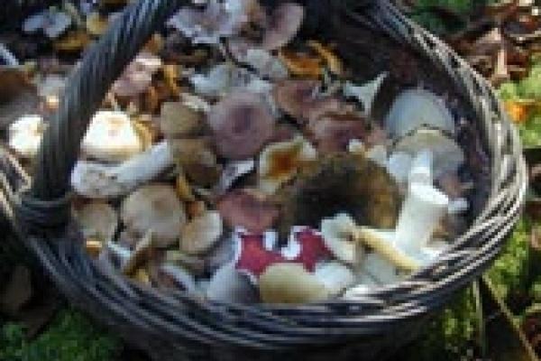 Дети отведали сырых грибов. Врачи сумели их спасти