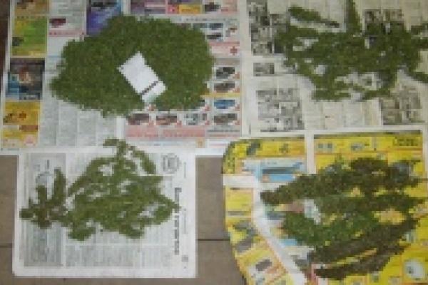 Липецкие наркополицейские изъяли из незаконного оборота около шести килограммов марихуаны