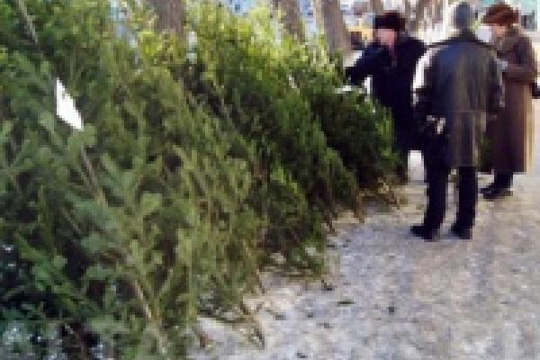 Продажа елок в Липецке начнется 20 декабря